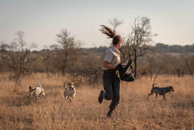 These Dogs Are Trained To Hunt Poachers!