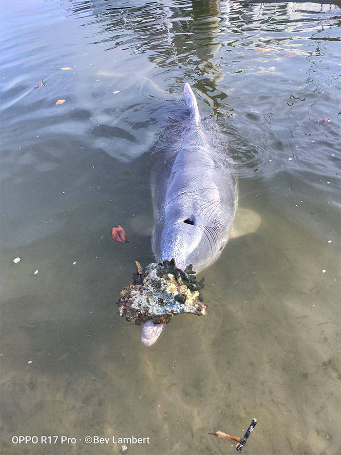 This Dolphin Loves Bringing Humans Gifts From The Bottom Of The Ocean