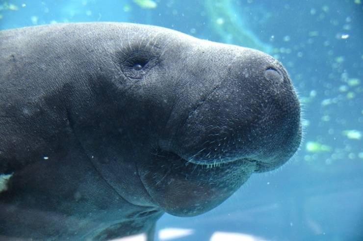 Animals That Were Saved From Extinction