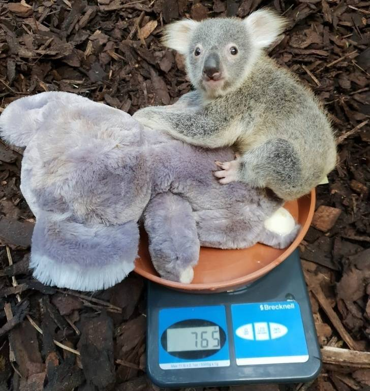 How To Weigh A Small Animal