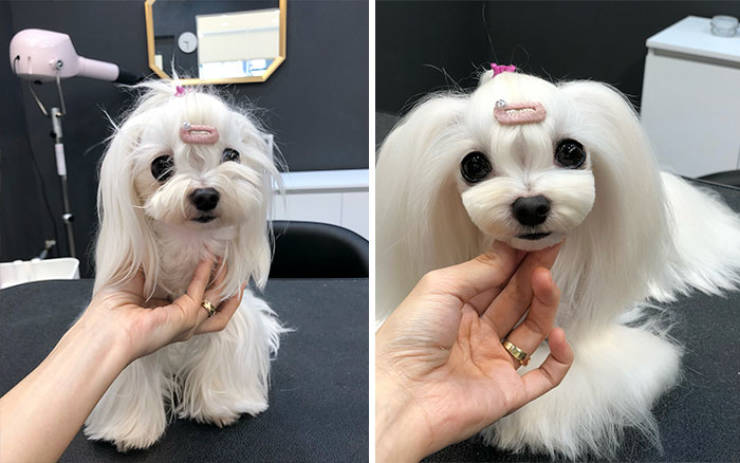 Dog Grooming Matters!
