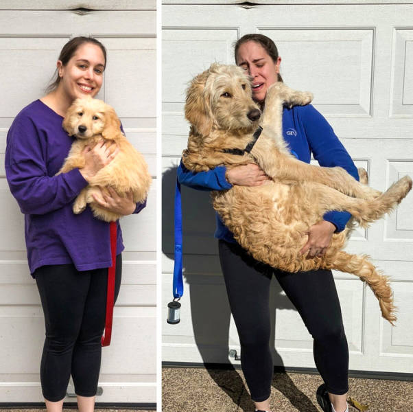Dogs Who Have No Idea How Giant They Are