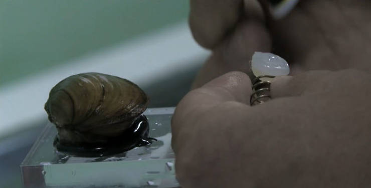 Poland Shows How They Use Clams To Control Water Quality