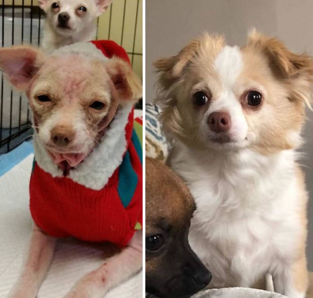 These Rescued Pets Are Especially Cute!
