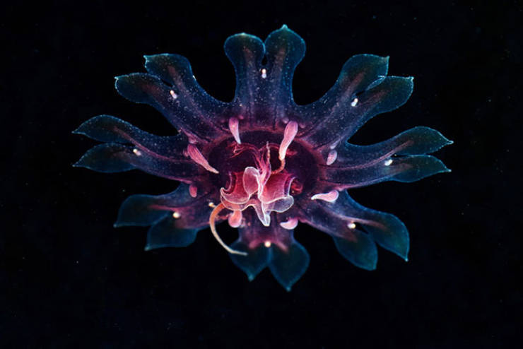 Marine Biologist Shows The Most Surreal Underwater Creatures