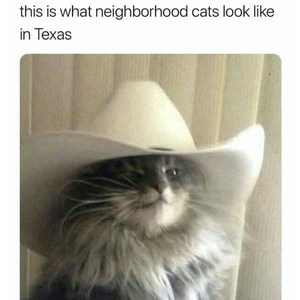 Cat Memes Don't Care About You. Not Sorry