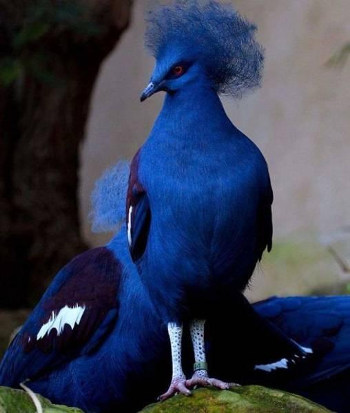 Ladies And Gentlemen, World's Most Beautiful Pigeon Breeds