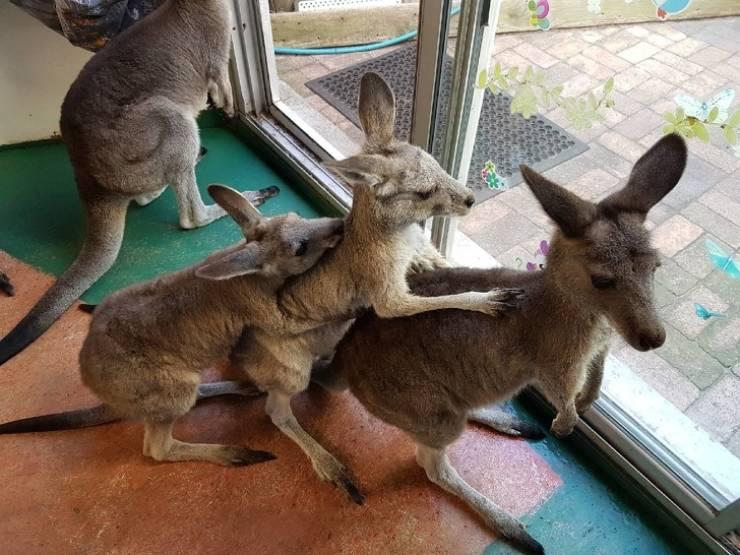 Wild Animals Who've Found Their Homes