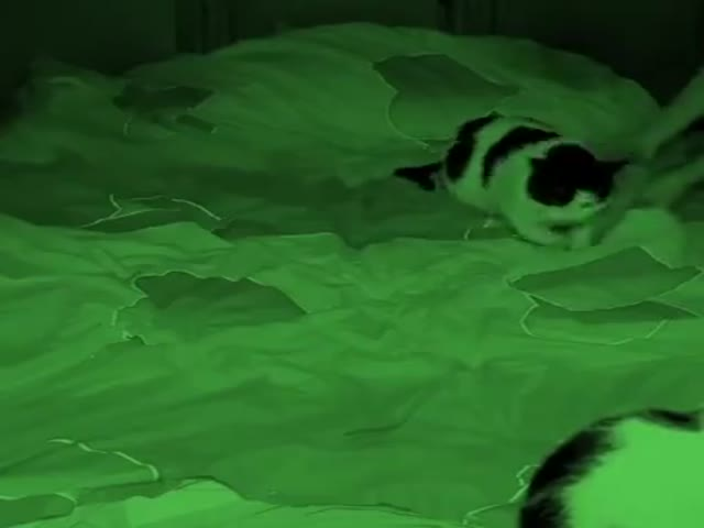 When Human Falls Asleep