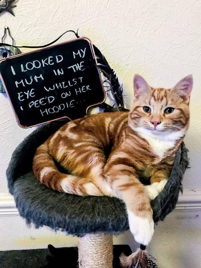 Shame, Pets. Shame…