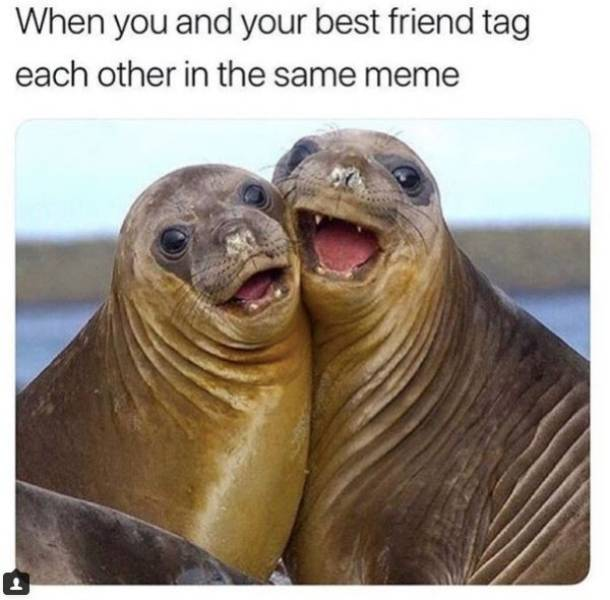At Least You Have A Best Friend… And These Memes