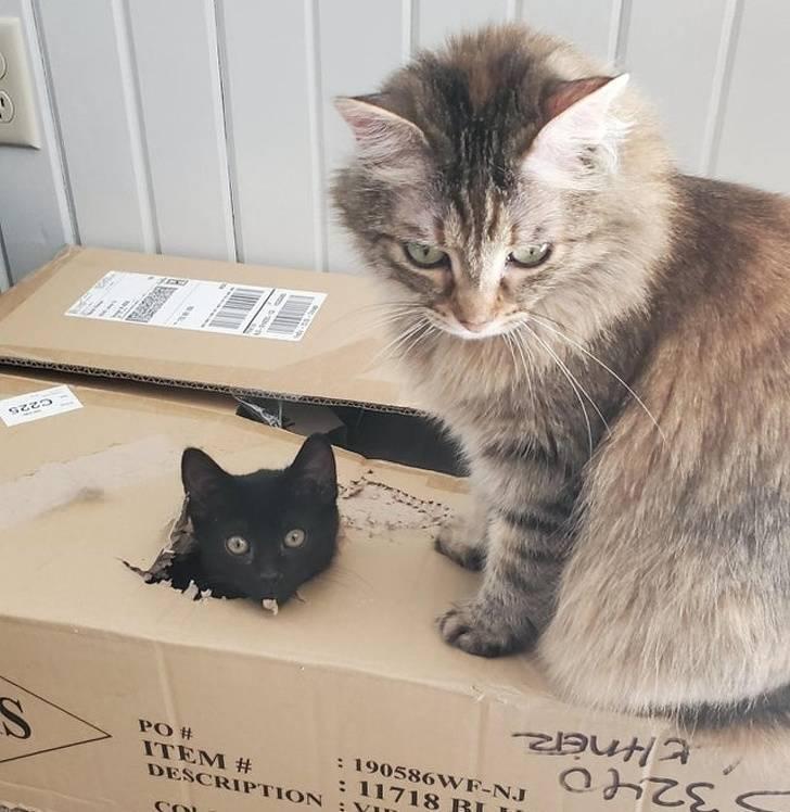 Cats. Camera. Action!