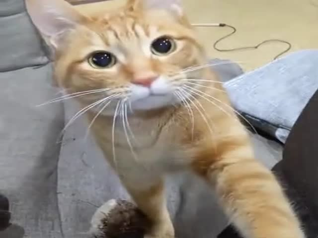 Play With Me! Please!