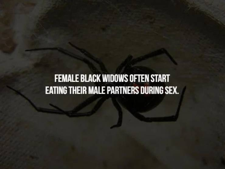Chill With These Creepy Facts, But In A Wrong Way