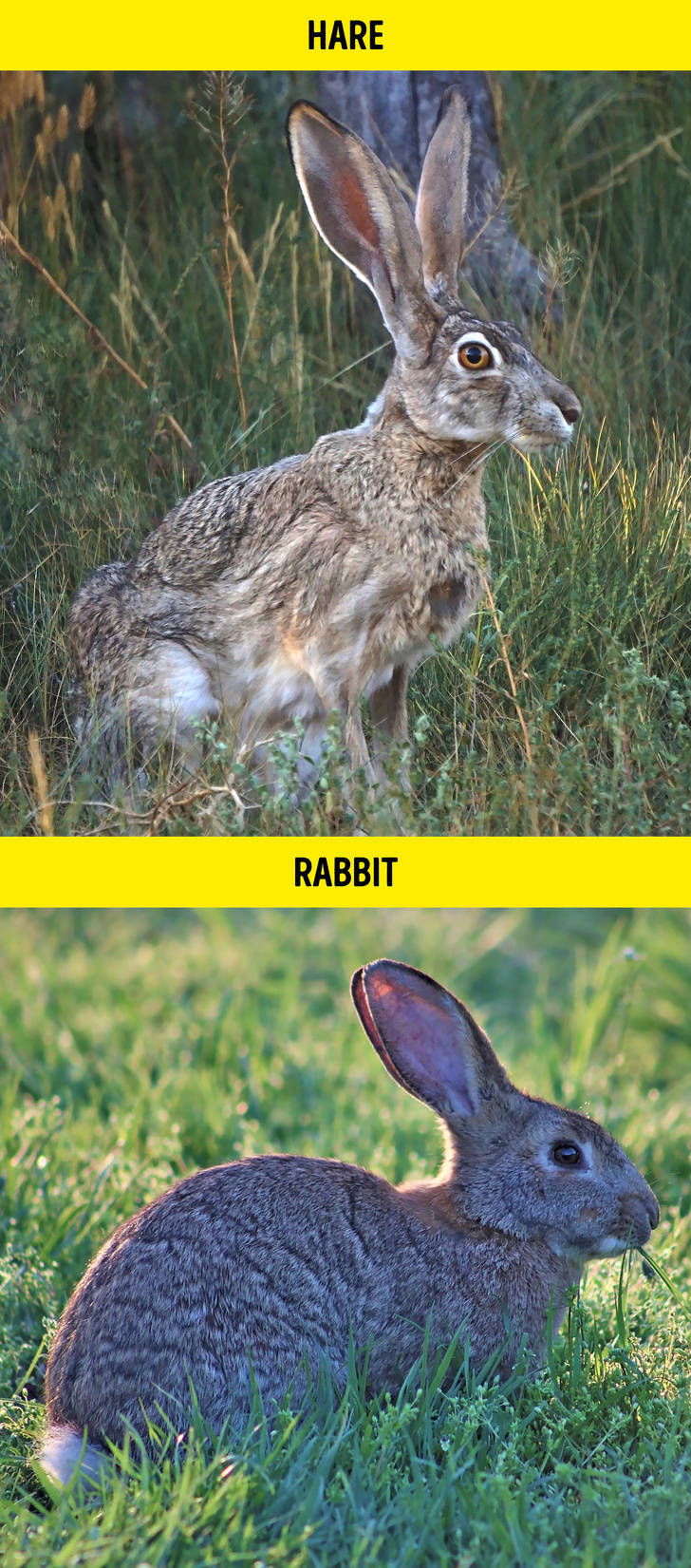 These Are NOT The Same Animals!