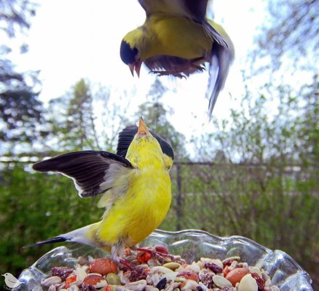 Bird Feeder Cam Shows The Secret Life Of Local Fauna