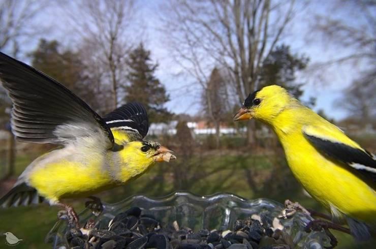 Bird Feeder Cam Shows The Secret Life Of Local Fauna