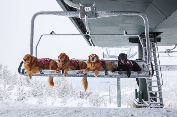 Even These Dogs Have Jobs!