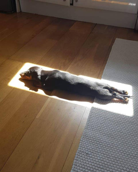 Animals Are In Love With The Sun!