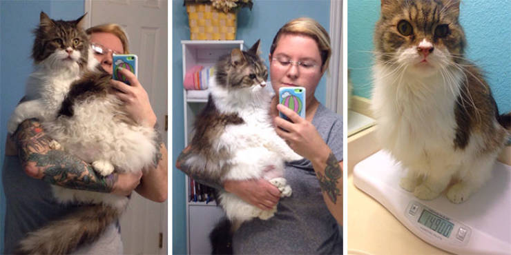 Yeah, Exactly, Cat Weight Losses!