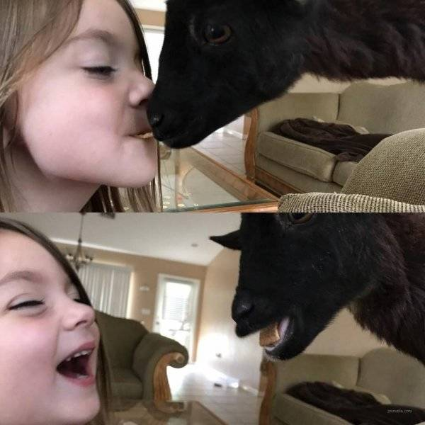 Animals, Just Keep Being Funny!
