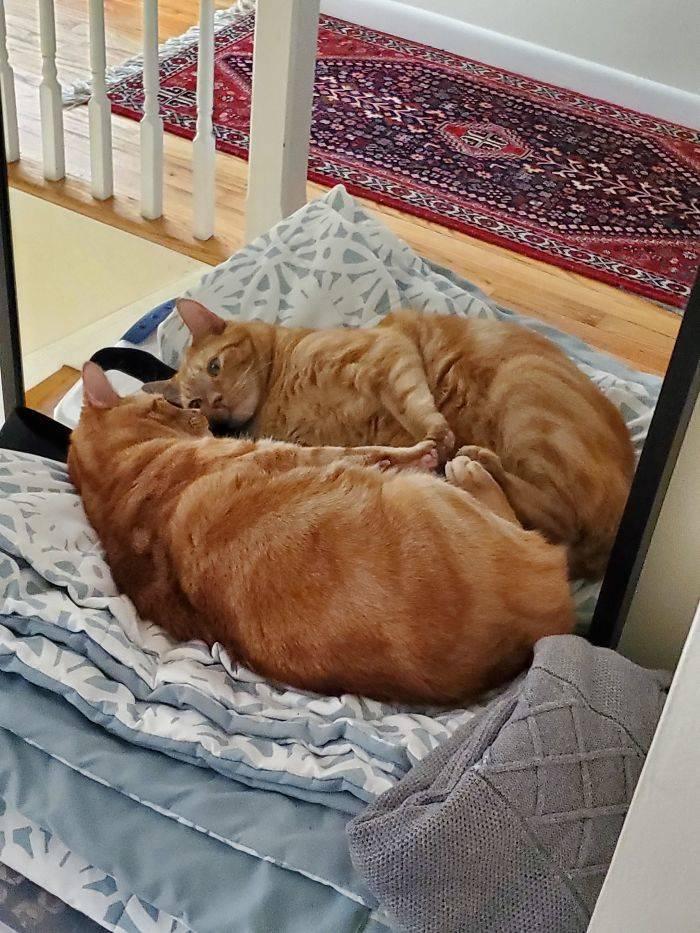 Pets Meet Mirrors