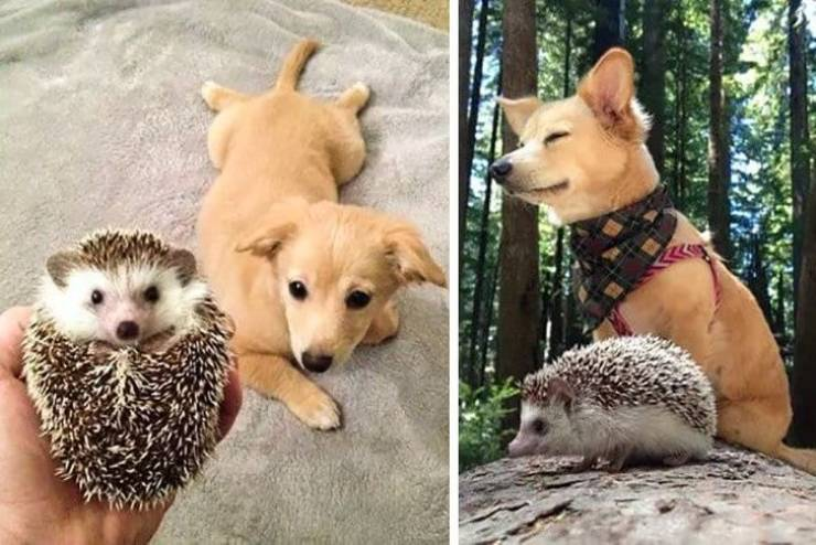 Pets Are Love, Pets Are Life!