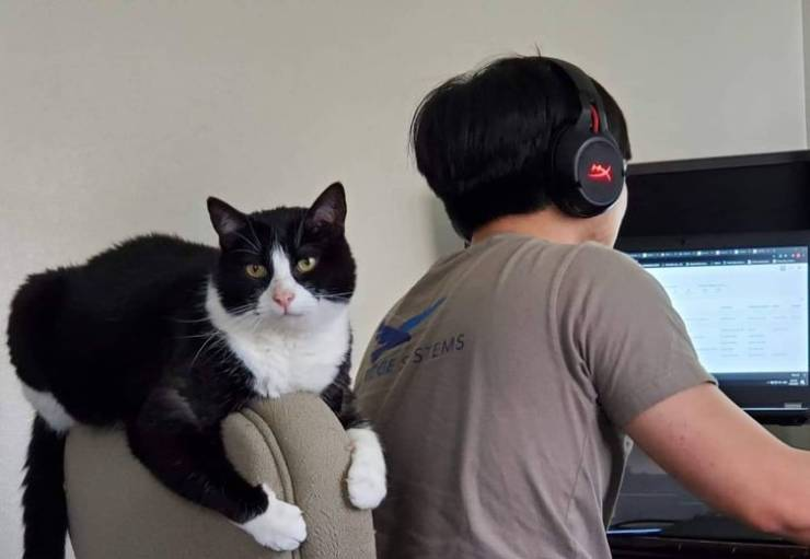 Work-From-Home Bosses Are Very Strict…