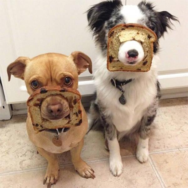 """Animals Explain What """"Inbread"""" Means"""