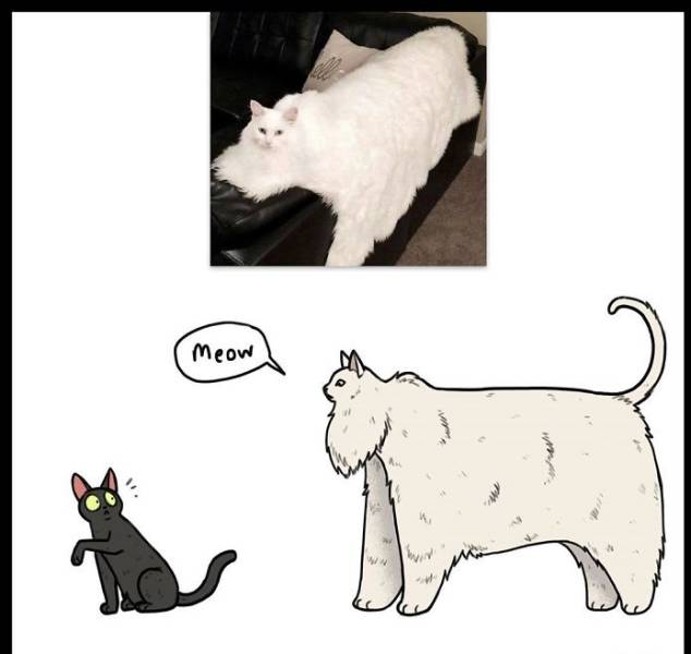 """Author Of """"Brutus And Pixie"""" Also Illustrates Animals From Popular Memes"""