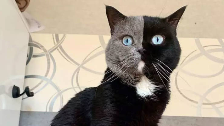 Cat With A Unique Face Becomes A Father… By Splitting In Two