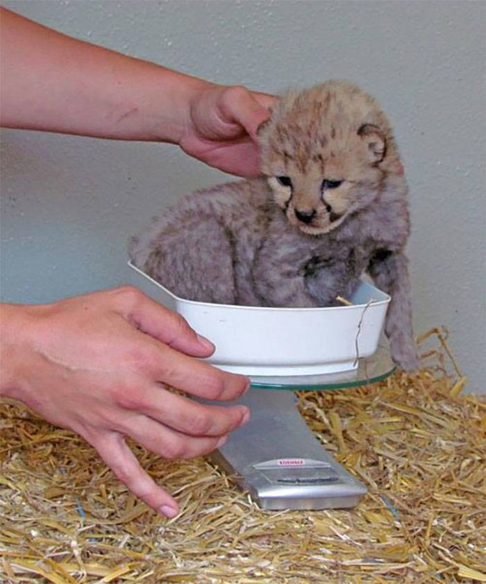 How To Weigh An Animal
