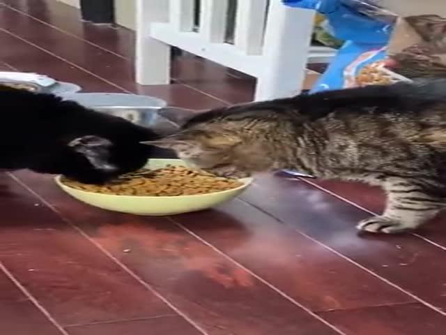 This Cat Is Broken