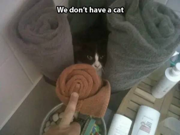 Cats Who Have Found Themselves New Slaves