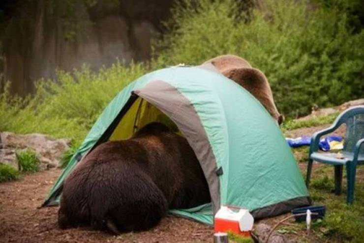 Camping's Not Easy, You Know…