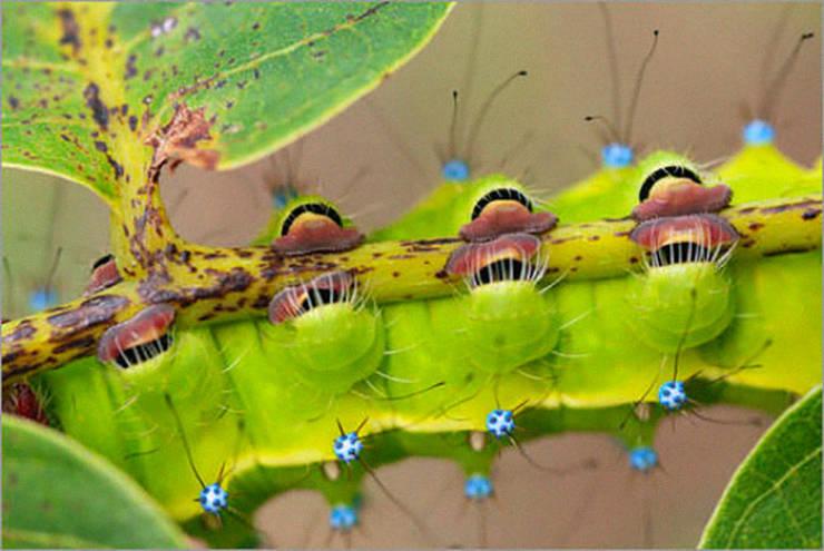 Caterpillars Do, In Fact, Have Cute Feet…