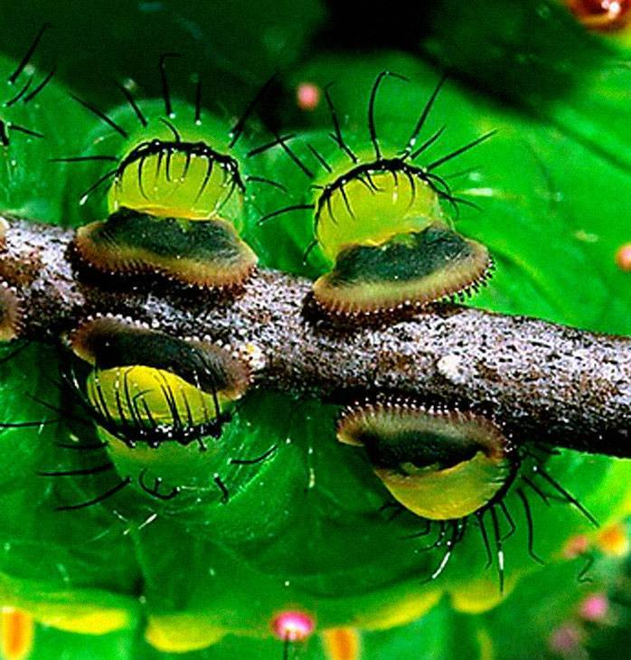 Caterpillars Do, In Fact, Have Cute Feet…