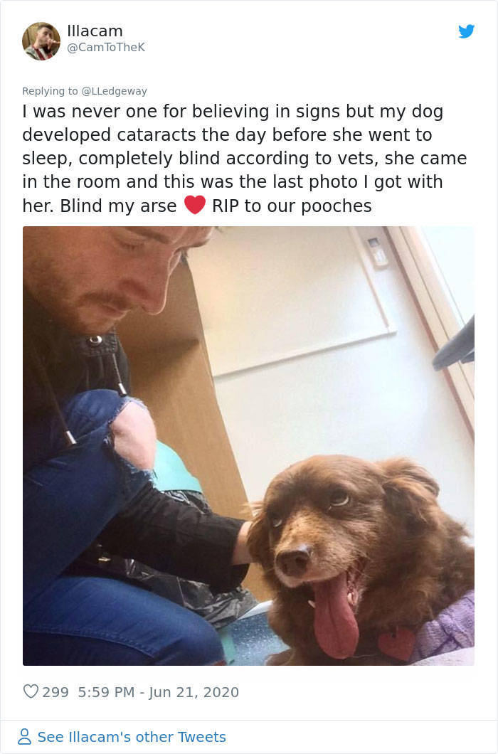 Woman Sees A Sign After Her Dog's Death, People Share Similar Ones