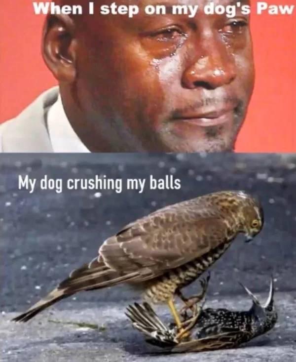 Your Dog Will Definitely Enjoy These Memes