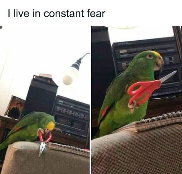 A Dose Of Feathery Humor Brought To You By Birds