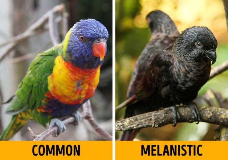 Meet Albino Animals' Counterparts – Melanistic Animals