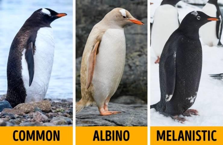 Meet Albino Animals' Counterparts – Melanistic Animals