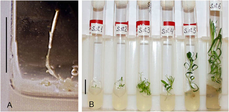 Scientists Managed To Grow A Plant From A 32000-Year-Old Seed, Presented By Squirrels