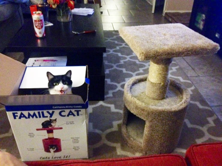 Cats Care About Every Single Gift…