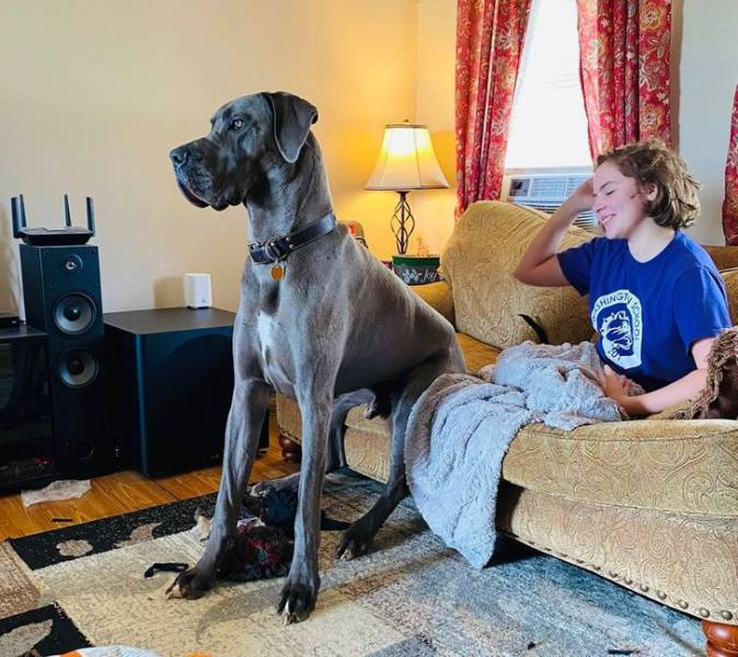 Pets And Their Owners Are Almost One