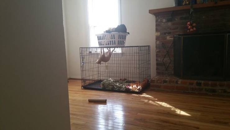 These Animals Are Not Having Their Best Day…