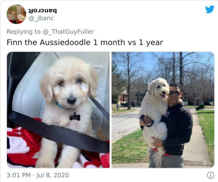 Dogs As Puppies Vs. As Adults