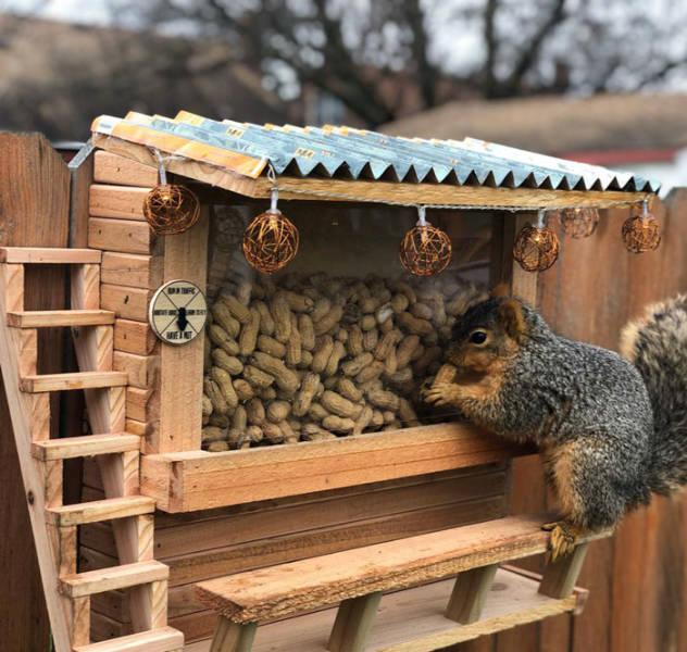 Squirrels Are Fantastic!