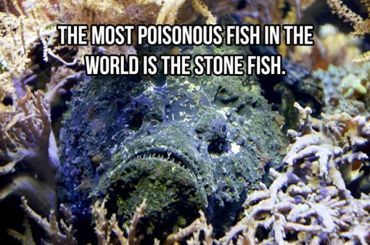 These Are Some Wildly Random Animal Facts