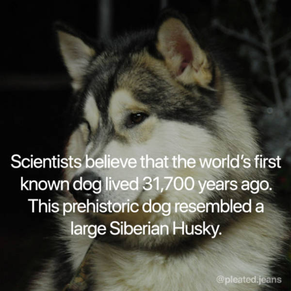 Four-Legged Facts About Dogs